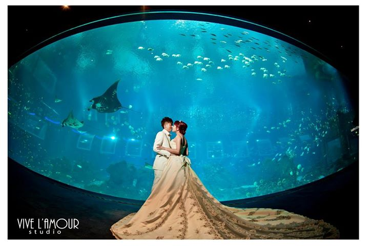 couple-aquarium-volans-couture