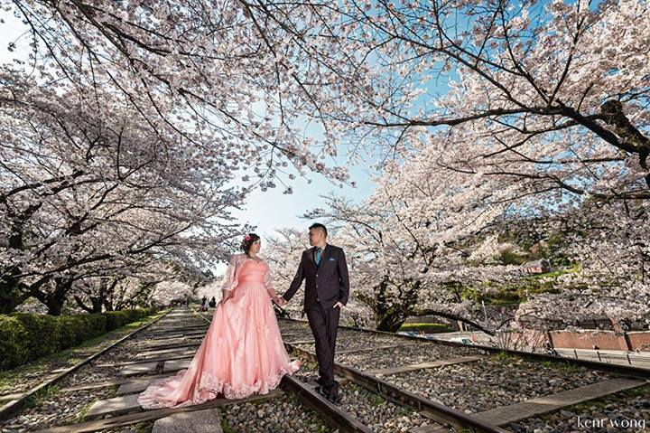 cherry-blossoms-2-kent-wong-photography